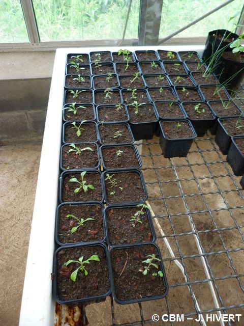 Tests germination-20120315-JH07