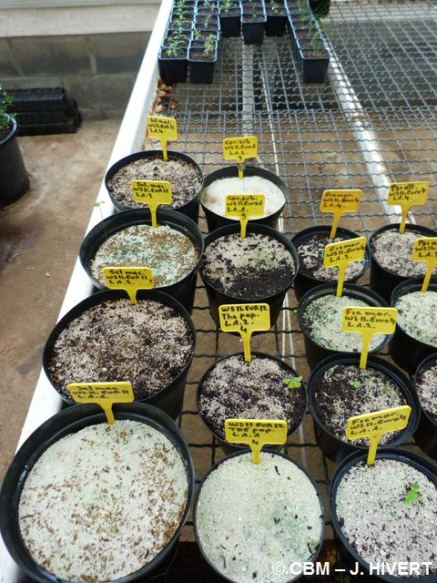 Tests germination-20120315-JH04