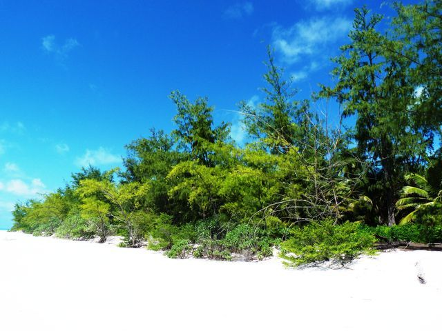 Gestion Casuarina-GRANDE GLORIEUSE-avril2011-JH3